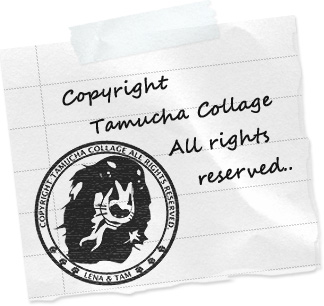 copyright tamuchacollage all rights reserved.